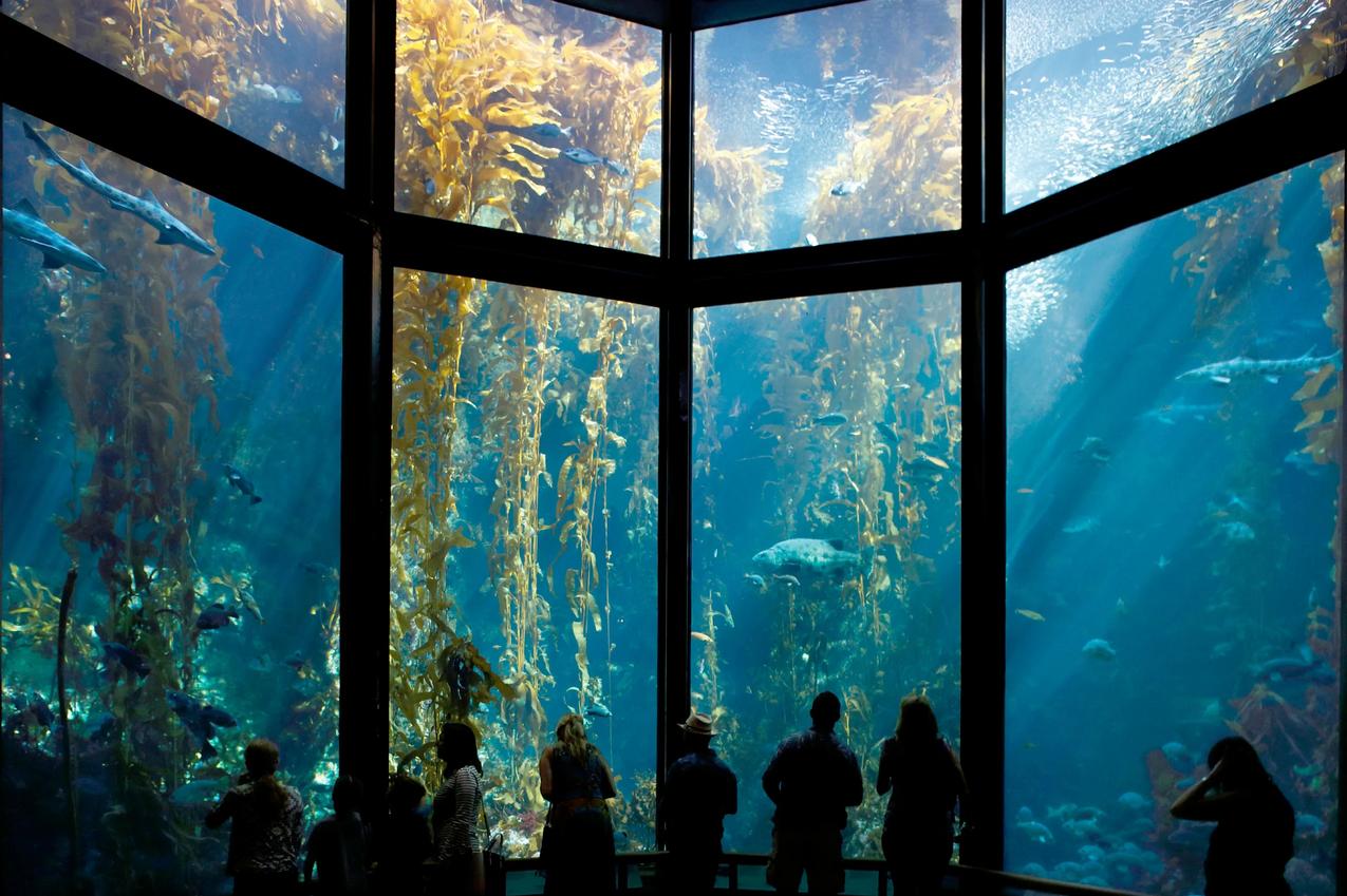 Monterey Bay Aquarium Kelp Forest Exhibit
